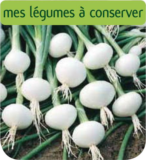 Oignon blanc premier jardinerie en ligne for Jardinerie en ligne