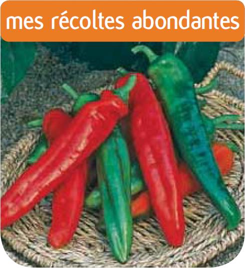 Jardinerie en ligne piment cote spadi hybride f1 for Jardineries en ligne