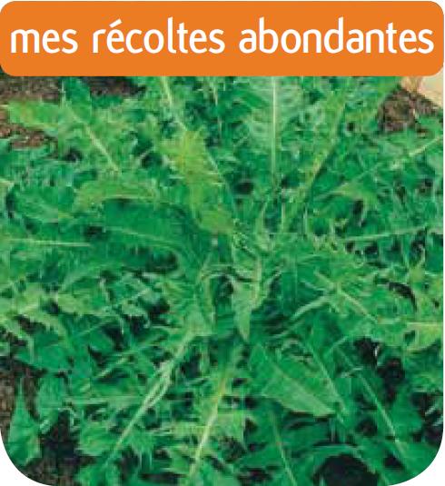 Cote jardin jardinerie pissenlit vert de montmagny am lior for Jardinerie en ligne catalogue