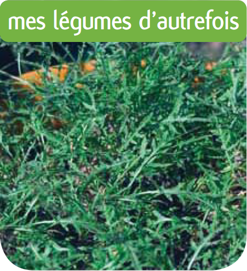 Jardinerie en ligne roquette sauvage for Jardineries en ligne