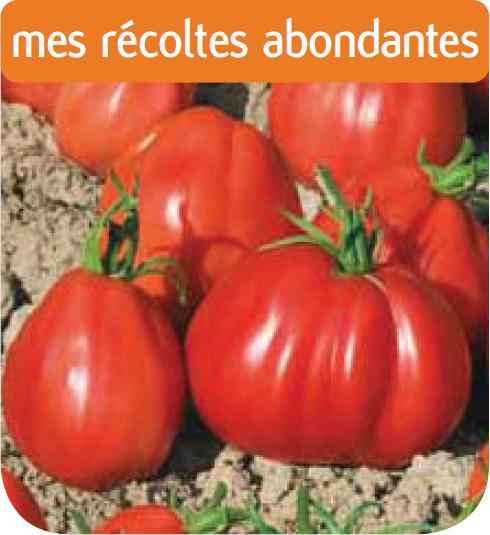 Tomate coeur de boeuf corazon hf1 cote jardin jardinerie for Jardinerie en ligne catalogue