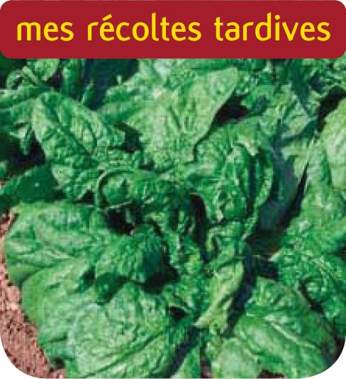 Cote Jardin Jardinerie Epinard Monstrueux De Viroflay