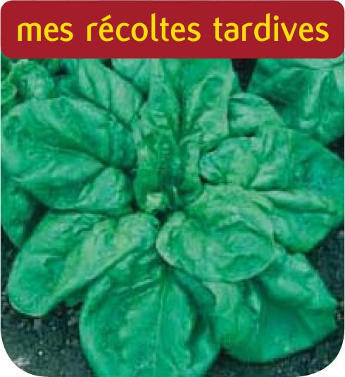 Epinard geant d 39 hiver cote jardin for Jardineries en ligne