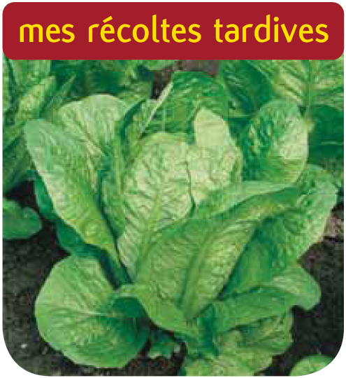 Cote jardin laitue romaine blonde maraichere for Jardinerie en ligne