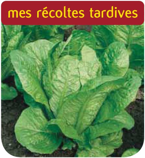Cote jardin laitue romaine blonde maraichere for Jardineries en ligne