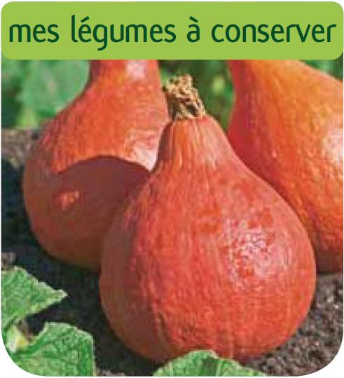 Potiron potimaron c t for Jardinerie en ligne