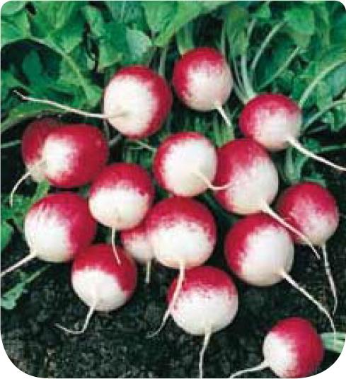 Cote jardin jardinerie en ligne radis gaudry 2 for Jardinerie en ligne