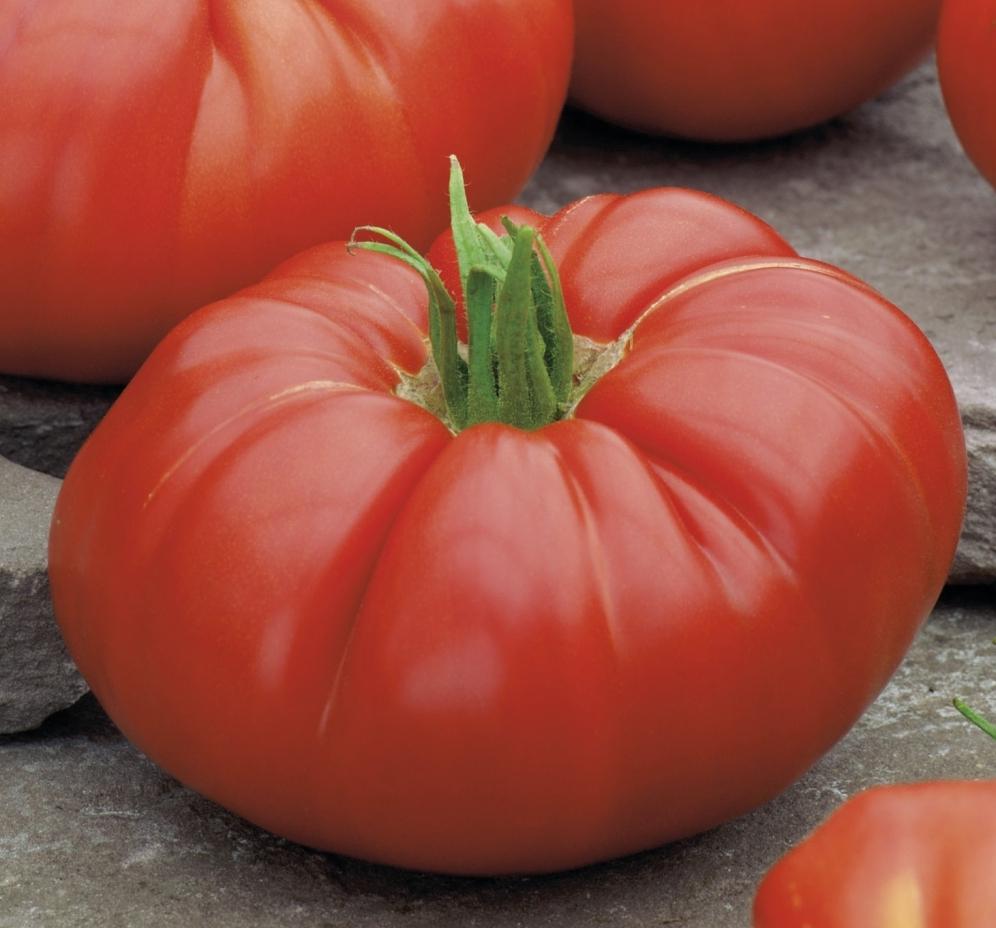 Jardinerie en ligne cote jardin tomate supersteack for Jardinerie en ligne