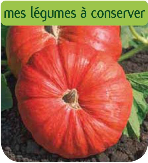 Jardinerie en ligne cote jardin courge musque de provence for Site de jardinerie en ligne