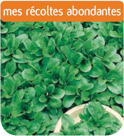 M che baval cote jardin jardinerie en ligne for Jardinerie en ligne