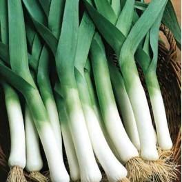 Poireau malabare c t for Jardinerie en ligne