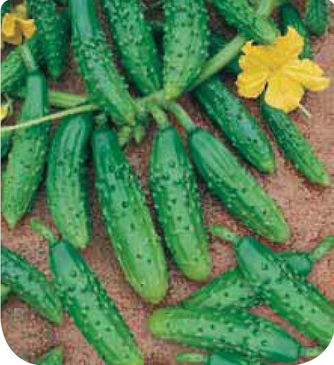 Cote jardin jardinerie en ligne cornichon fin de meaux for Site de jardinerie en ligne