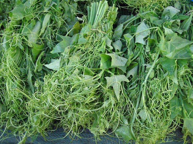 C t jardin christophine chayotte jardinerie en ligne for Site jardinerie en ligne