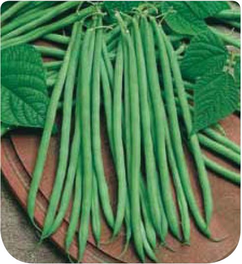 Cote jardin haricot nain filet sans fil oxinel for Jardinerie en ligne