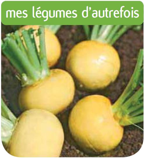 Jardinerie cote jardin navet jaune boule d 39 or for Jardinerie en ligne catalogue